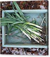 Leeks In Wooden Box On A  Frosty Winter Acrylic Print