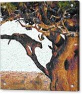 Leopard In A Tree Acrylic Print