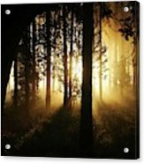 Light In The Woods Acrylic Print