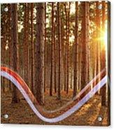 Light Swoosh In Woods Acrylic Print