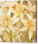 Lilycrest Dainties Acrylic Print