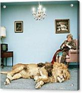 Lion Lying On Rug, Mature Woman Knitting Acrylic Print