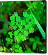 Little Patches Of Color  Acrylic Print
