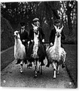 Llama Ride Acrylic Print