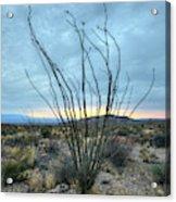 Lone Bush - Sunrise Acrylic Print
