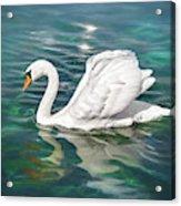 Lone Swan Lake Geneva Switzerland Acrylic Print