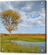 Lone Tree By A Wetland Acrylic Print