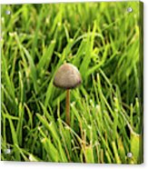Lonely Little Mushroom Floating On The Grass Acrylic Print