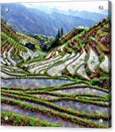 Lonji Rice Terraces Acrylic Print