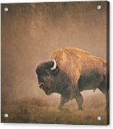 Lord Buffalo Acrylic Print