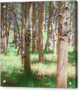 Lost In The Woods - Kenosha Pass, Colorado Acrylic Print