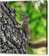 Lost Nuts Acrylic Print