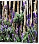 Love Of Lavender Acrylic Print