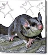 M Is For Mahogany Glider Acrylic Print
