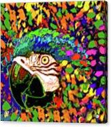 Macaw High I Acrylic Print