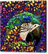 Macaw High II Acrylic Print