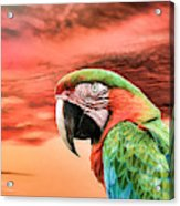 Macaw Parrot Acrylic Print