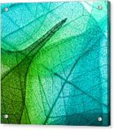Macro Leaves Background Texture Acrylic Print