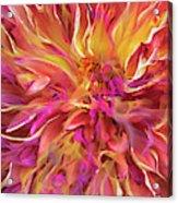 Magenta Sunshine Acrylic Print