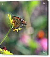 Magical Monarch Acrylic Print