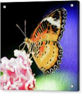 Malay Lacewing Butterfly I Acrylic Print