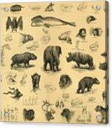 Mammals Acrylic Print