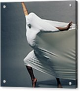 Man Pressing Into Fabric, Arms Extended Acrylic Print