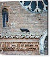 Mary's Cat Acrylic Print