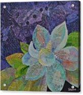 Midnight Magnolia II Acrylic Print