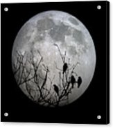 Midnight Moonshiners  Acrylic Print