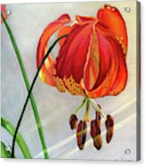 Moment in the Sun - Lily Acrylic Print