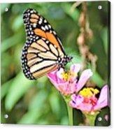 Monarch's Stance... Acrylic Print