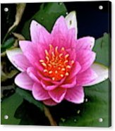 Monet Water Lilly Acrylic Print