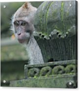 Monkey Forest Acrylic Print