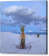 Moon And Soaptree Yucca, White Sands Acrylic Print