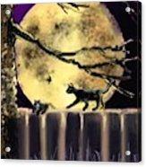 Moon Cats Acrylic Print