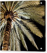 Moon Through Palm Tree Acrylic Print