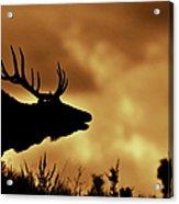 Moose At Sunrise Acrylic Print