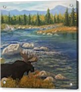 Moose by river Acrylic Print