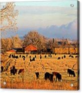 Morning Farm Scene Acrylic Print