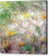 Morning Impressions Of Jaffa 2 Acrylic Print