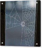 Morning Spider Web Acrylic Print