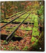 Mossy Train Track In Fall Acrylic Print