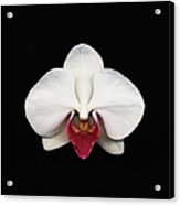 Moth Orchid Against Black Background Acrylic Print