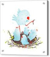 Mother Bird In Nest Feeding Her Babies Acrylic Print