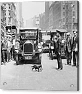 Mother Cat Blackie Halts Traffic As She Acrylic Print