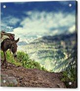 Mountain Donkey Acrylic Print
