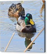 Mr And Mrs Duck Acrylic Print