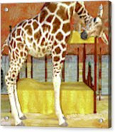 Ms Kitty And Her Giraffe  Acrylic Print