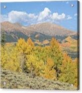 Mt. Elbert Autumn Acrylic Print
